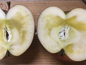 インフルエンザ 蜜入りりんご.jpg