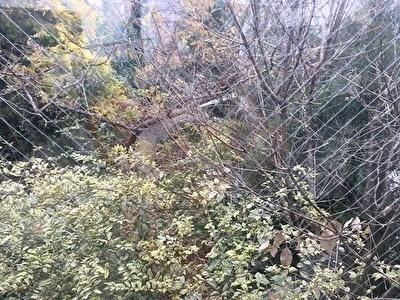 代々木 そら植物園2.jpg