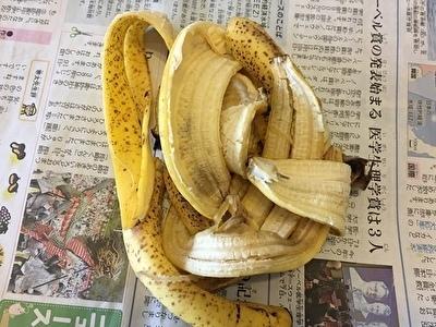 生ゴミ処理バナナ①.jpg