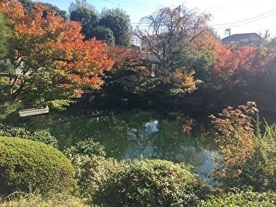 目白庭園7.jpg